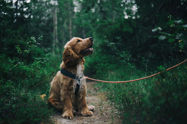 camping with dogs in the wilderness