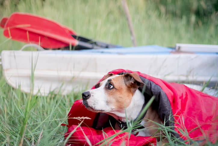 brown dog sleeping in a camping dog bed