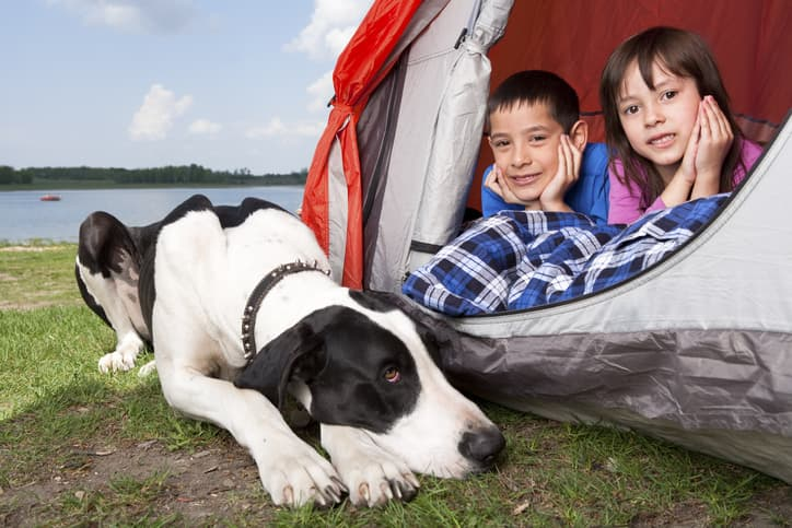 white dog with black spots sitting by a tent with two children