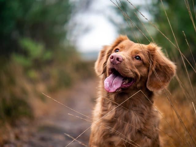 dog on summer trail