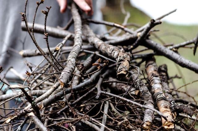 dry sticks for firewood