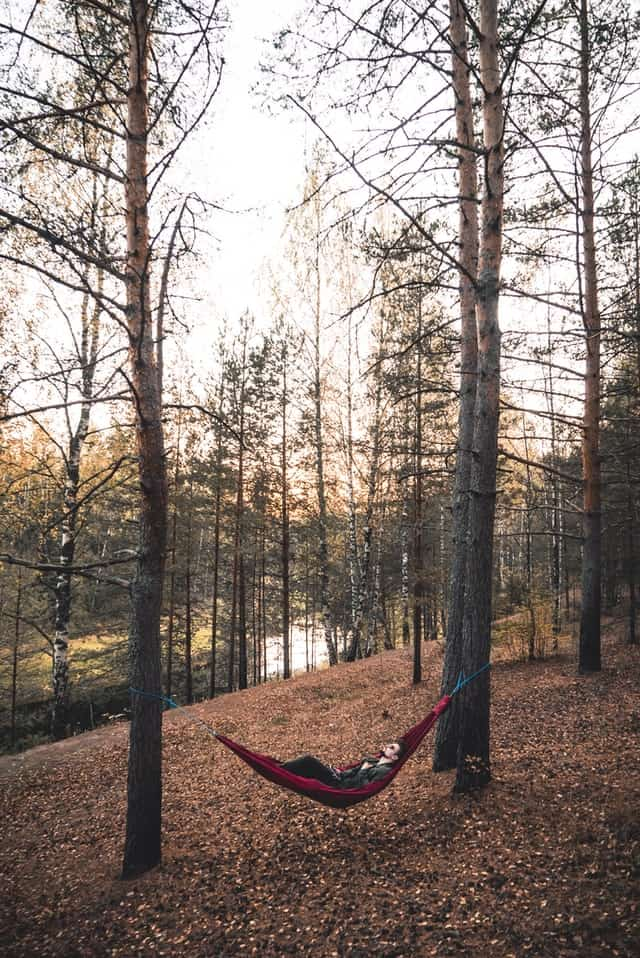 hammock set up in the woods