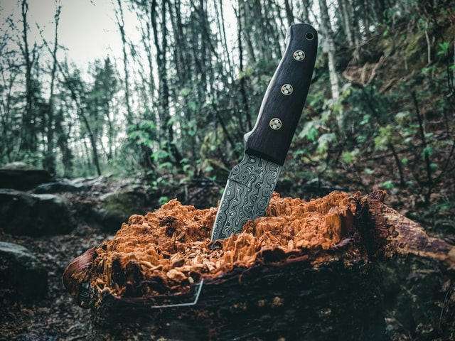 knife stuck in a piece of wood in the forest